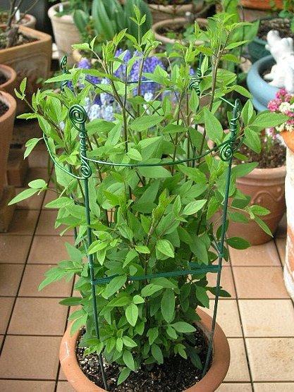 plants_saport