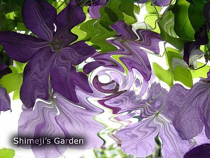 shimejis_garden