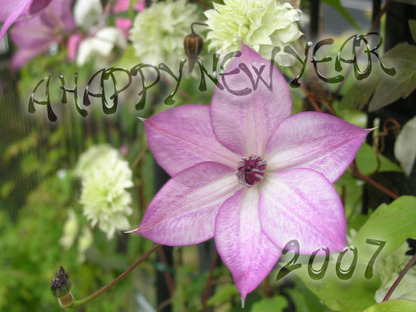 2007_happy_new_year